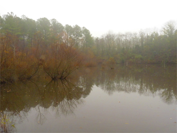 Misty morning in the Wetlands.