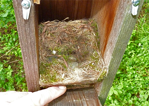 An empty nest is what greeted me at the Sail Boat Pond nest (5/8/14).