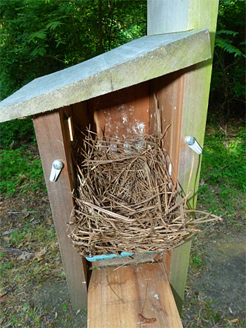 A new nest hase been started at the Cow Pasture (5/27/14).