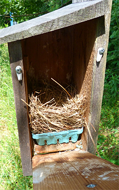 A bluebird nest this time around for the Bungee nest box (6/3/14).