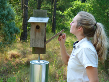 Carefully opening the nest box at the Butterfly House (7/8/14).