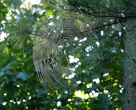 Although its still early in the day, this web has already seen some activity.