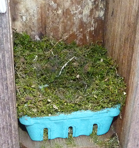 A nearly complete chickadee nest at the Butterfly House (3/17/15).
