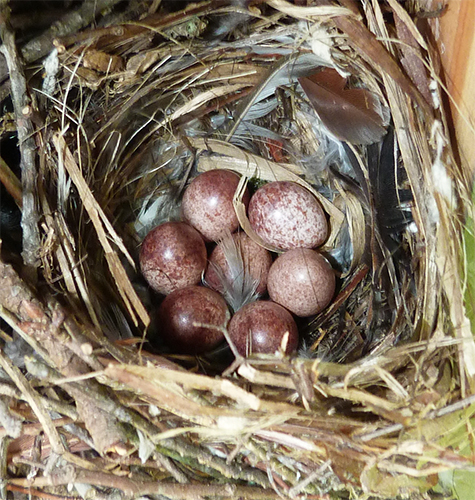 The nest at the Picnic Dome on April 12, one week ago.