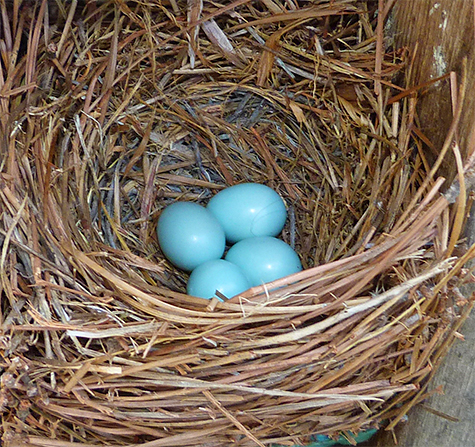 Four eggs is what she saw (Butterfly House - 6/23/15).