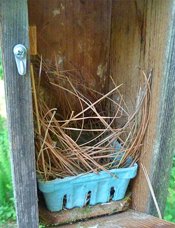 This nest has been untouched for four or more weeks (Bungee - 6/23/15).