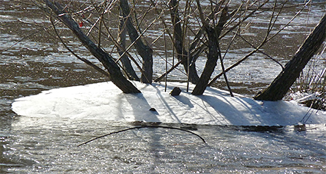 Ice from the previous night's freeze is suspended above current pond's water level.